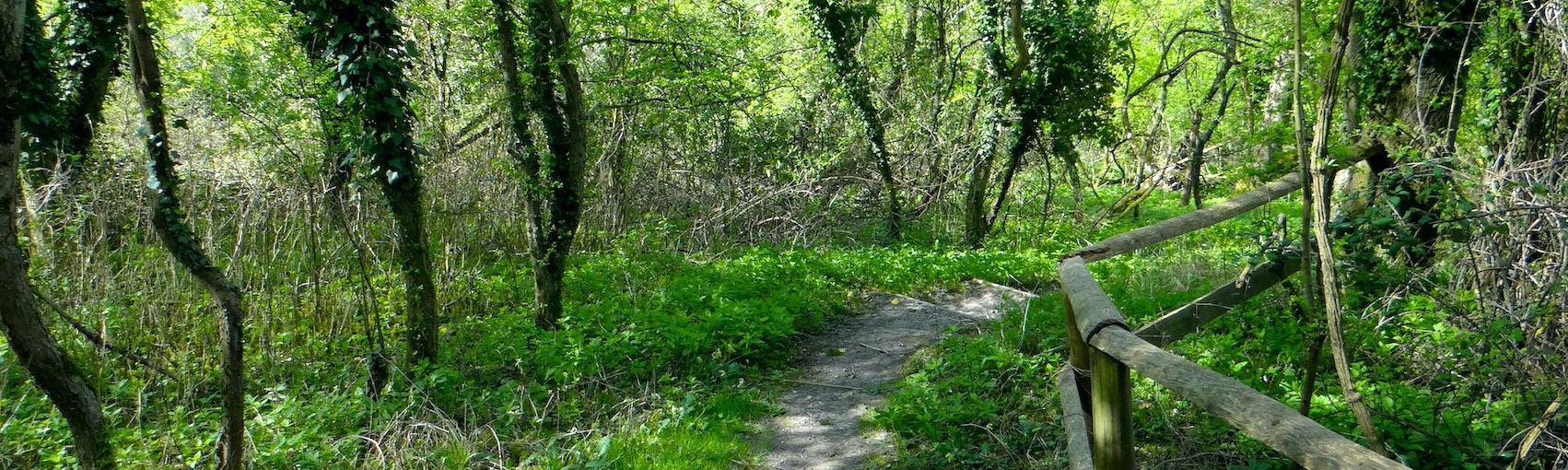 Nature Trails Header image